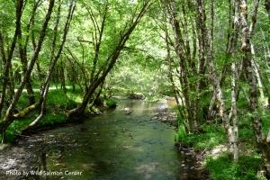 Devil's Lake Fork in the Tillamook Forest