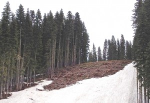 Unrestored clearcuts just above Jeff Flood Express [Photo credit: Crag Law Center]