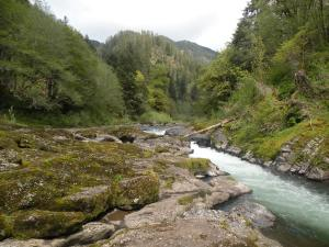 Trask River, Tillamook State Forest