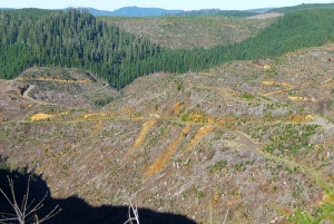 Clearcuts: better for the environment?  (photo by F. Eatherington)