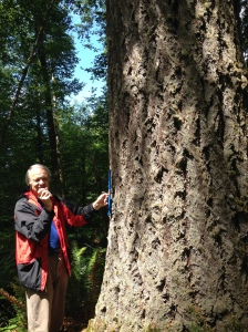 Trygve Steen considering an old growth Douglas Fir in the Clatsop Forest