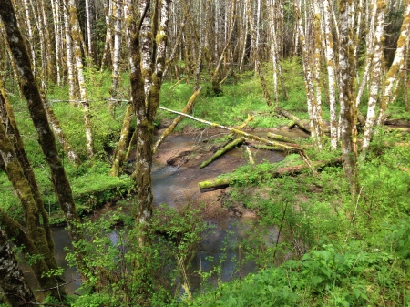 Buster Creek in the Clatsop State Forest